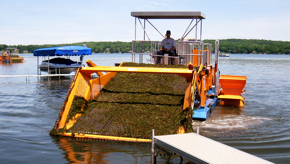 What Is Nuisance Aquatic Vegetation?